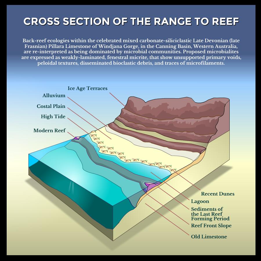 Reef Diagram